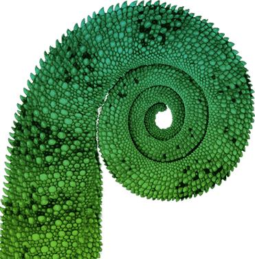gecko-tail